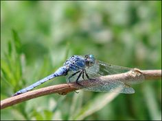 dragonfly  Google Image Result for http://www.secondpicture.com/tutorials/photography/shallow_depth_of_field_in_photo.jpg