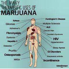 Marijuana Facts: marijuana dispensaries, how to grow marijuana, florida medical…