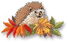 Indian Summer hedgehog