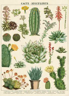 Poster / inpakpapier Cactus meerleuks - Cavallini & Co wrap cacti & succulents