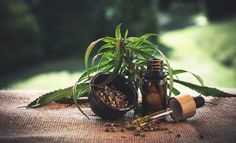 Scientific studies are still in progress, but it's looking like CBD, also known as cannabidiol, could be helpful for many people struggling with their pain management. Here's what we know about CBD so far and how it could help you manage your pain. Cannabis News, Medical Cannabis, Cannabis Plant, Cannabis Oil, Cigarettes Électroniques, Sante Bio, Cbd Hemp Oil, Oil Benefits, Encouragement