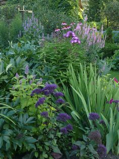 mix of pinks and purples and leaf colours and textures. Love how it spills over the grass area.