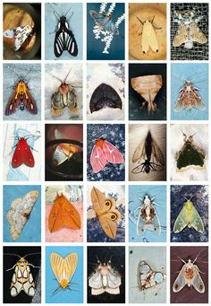 A new collection from the photographer Emmet Gowin delivers an appreciation for the hidden ties between humans and moths as well as art and science.
