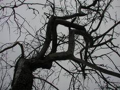 "8x10 Gloss Print Digital Photograph ""Twisted Branches"". $20.00, via Etsy."