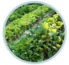 Huerta Orgánica en Otoño-Invierno | INTA :: Instituto Nacional de Tecnología Agropecuaria