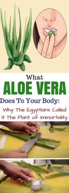 Aloe Vera has amazing healing properties and is known for centuries as plant of immortality. Aloe Vera has 200 biologically active: vitamins, amino acids, enzymes, polysaccharides and minerals that stimulate nutrient absorption. Here are some : Vitamins Herbal Remedies, Health Remedies, Home Remedies, Cough Remedies, Natural Cures, Natural Healing, Natural Hair, Natural Beauty, Body Percussion