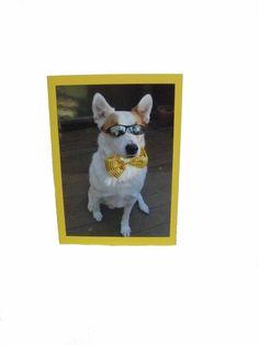 Dog greeting card pet greeting cards funny blank by Lillyzcardz, $4.00