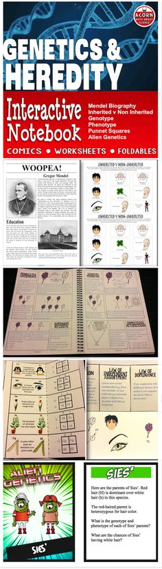 This differentiated Genetics and Heredity Interactive Notebook has comics, activities, diagrams and foldables and more. Over 30 pages of engaging interactive activities.
