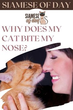 Any cat parent will tell you that we are devoted to our pets, but we may not be so devoted to some of the behaviors they choose to bestow on us. The majority of kitten bites aren't painful, however, this can change when your cat grows older and begins to bite harder. #siamese #siameseofday #cats #pets #kittens #Blog #cattips #cathealth #kitten #justcats Kitten Biting, Kitten Care, Cat Health, Siamese, Kittens, Pets, Cute Kittens, Kitty Cats, Baby Cats