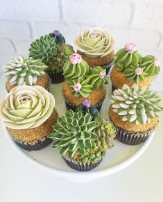 Succulent Cupcakes by Leslie Vigil
