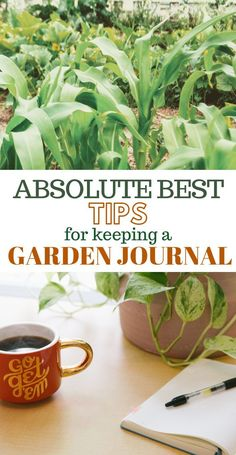 for beginners book How to Start a Garden Journal - Gardening Journals For Beginners - Click now to learn how to keep your own garden journal, garden journal tips and ideas, what to write in your garden journal, and more! Organic Vegetables, Growing Vegetables, Gardening Vegetables, Planting Seeds, Planting Flowers, Flower Gardening, Container Gardening, Olive Garden, Starting A Garden