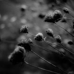 https://flic.kr/p/LbYwy5   Summer Wildflowers 028   dark in the day