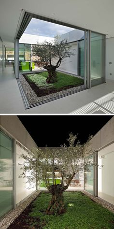 This Modern Home Has A Glass Atrium With A Single Olive Tree, That's The Heart Of The House. The entirety Of The Different Living Areas Of The Home Surround The Atrium And It's A Place Where The Boundary Between The Interior And Exterior Disappears. Atrium Garden, Terrace Garden, Modern Home Interior Design, Modern House Design, Maison Atrium, Modern Exterior, Interior And Exterior, Succulent Garden Diy Indoor, Atrium Design