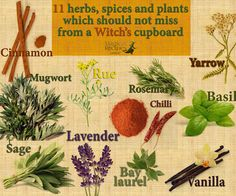 Which 11 herbs, spices and plants should not miss from a Witch's cupboard?