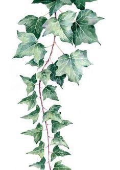 Mother in law tongue, succulent print, stefan gevers print, watercolour print, plant print, Botanical, Botanic art, botanic illustration, flower art,watercolour