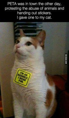 Cats. I'm an asshole. I wear fur. What now PETA?