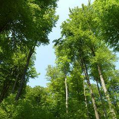 Nationales Naturerbe: Verantwortung für nachfolgende Generationen   https://caladesi.de/nationales-naturerbe-verantwortung-fuer-nachfolgende-generationen/