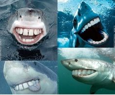 sharks would be less scary this way lol fuunnnay