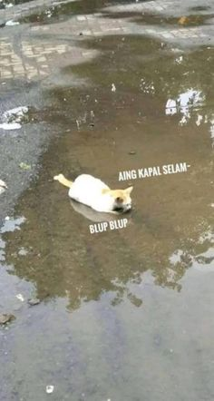 Ideas For Memes Indonesia Kucing Memes Funny Faces, Funny Cartoons, Funny Jokes, Memes In Real Life, Life Memes, Memes Work Offices, Internet Memes, New Memes, Jokes Quotes