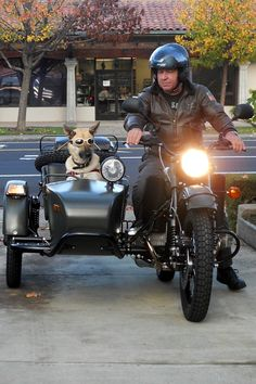 My dog Niner in his Sidecar. Dec. 2012 after taking delivery from Ski. Purchased it from Ski at Triquest in Santa Clara.