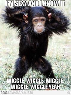 Wigle Wigle Wigle
