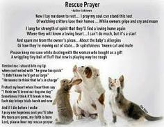 92 Best Quotes About Rescue Dogs Images Dogs Animal