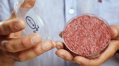 Cientistas holandeses decidiram fundar uma empresa para fazer a comercialização de hambúrgueres feitos a partir de células-tronco