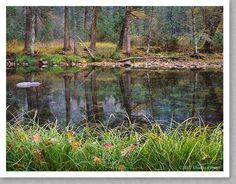 Grasses and Leaves, Fall, Merced River, Yosemite - Charles Cramer