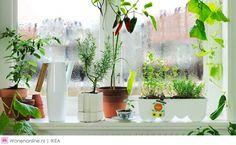ikea-tuintrends-2015-urban-gardening--12