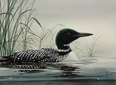 Loon Near The Shore by James Williamson - Loon Near The Shore Painting - Loon Near The Shore Fine Art Prints and Posters for Sale