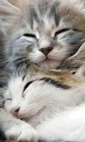 kitten luv. Fluffy Kittens, Cute Kittens, Cats And Kittens, Kittens Cutest Baby, Baby Animals, Animals And Pets, Cute Animals, Kitten Love, I Love Cats
