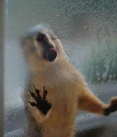 20 animaux qui lèchent la vitre  2Tout2Rien