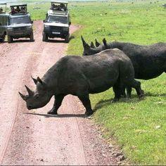 Giraffe, Elephant, Serengeti National Park, Baboon, Hyena, Leopards, Acacia, Impala, Diversity