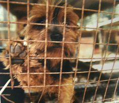 Missouri Tops Humane Society's List of Worst Puppy Mills