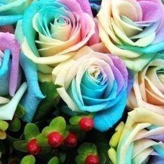 12 packs 12 colors Chinese rose seeds flowers seeds bonsai garden supplies home flower pots planters Rose Flower