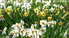 Ogród Botaniczny / Lublin #travel #flowers #botanicgarden