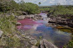 Vive un experiencia única en caño cristales. Come visit the most beautiful river in the world. #alojamientosecologicos #ecoturismosostenible #viajealternativo