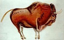 Bison polychrome relevé dans la grotte d'Altamira.