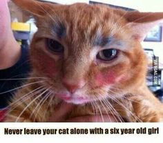 .NEVER leave your cat alone with a 6 year old girl