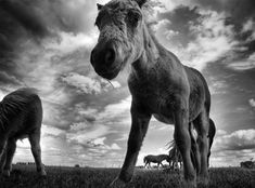 Beautiful Black And White Photography Of Animals