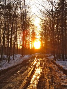 Camp road,   Michigan  By Honey Bee