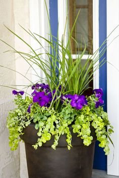 Porch Pots Planting a Perfectly Proportioned Garden Vase -- 3 easy steps to planting a garden vase that will be a beautiful focal point for your front porch, patio or deck! Large Planters, Flower Planters, Porch Plants, Garden Plants, Plants In Pots, Plants Indoor, Plant Pots, Container Plants, Container Gardening