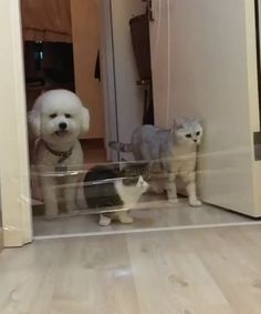 Funny cats compilation 2016 Best funny cat videos ever by Funny Vines.Hope you like a new funny cat videos compilation funny cats and silly cats . Cute Funny Animals, Funny Animal Pictures, Cute Baby Animals, Funny Dogs, Animals And Pets, Cute Cats, Dumb Dogs, Funny Cat Compilation, Funny Cat Videos
