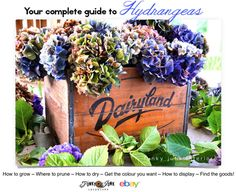 Everything you've ever wanted to know about Hydrangeas! How to grow, prune, dry, get the colour you want, display ideas and where to find th...
