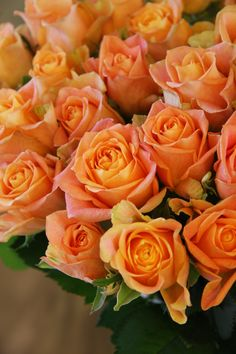rose Jus d'orange