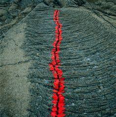 Nils Udo - Sans titre, 1990. Fissure dans une coulée de lave, pétales appelés « langues de feu » Ilfochrome sur aluminium, 100 x 100 cm, Ile de la Réunion