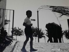 """""""Quando a Brescia c'erano gli elefanti"""" - 1970 http://www.bresciavintage.it/brescia-antica/fotografie-d-autore/quando-a-brescia-cerano-gli-elefanti-1970/"""