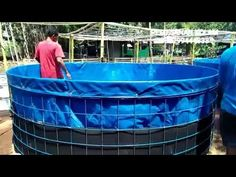 Tilapia Fish Farming, Catfish Farming, Shrimp Farming, Fish Tank Aquaponics, Aquaponics System, Fish Ponds Backyard, Backyard Farming, Diy Swimming Pool, Pond Design