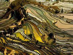 Las terrazas de arroz se encuentran en Yunnan, China, y los diferentes tipos de vegetación presenta colores alternos a un paisaje que parece más una pintura que una realidad.