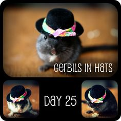 Gerbils in hats day 25 Hamster Clothes, Animal Dress Up, Hamster House, Hat Day, Cute Hamsters, Gerbil, Little Critter, Animals Of The World, Rodents